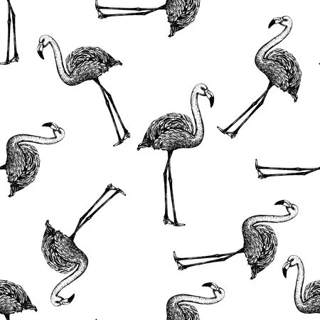 Seamless pattern of hand drawn sketch style flamingo. Vector illustration isolated on white background.