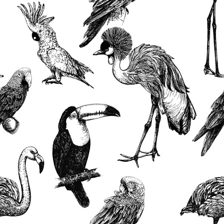Seamless pattern of hand drawn sketch style exotic birds isolated on white background. Vector illustration.  イラスト・ベクター素材