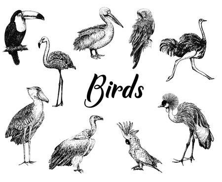 Big set of hand drawn sketch style birds isolated on white background. Vector illustration.