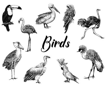 Gran conjunto de pájaros de estilo boceto dibujados a mano aislados sobre fondo blanco. Ilustración vectorial Ilustración de vector