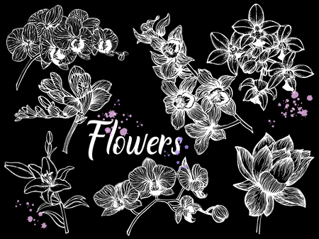 Set of hand drawn sketch style exotic flowers isolated on black background. Vector illustration.