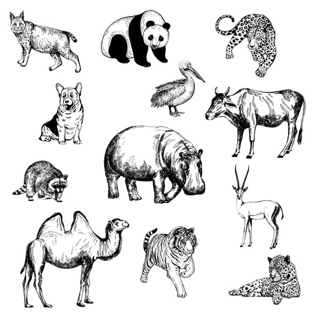Set of hand drawn sketch style animal icons