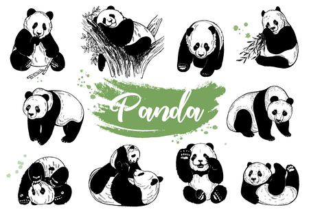 Set of hand drawn sketch style giant pandas isolated on white background. Vector illustration.