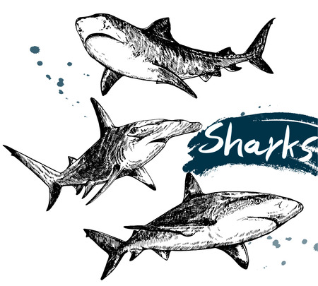 Set of hand drawn sketch style sharks isolated on white background. Vector illustration.