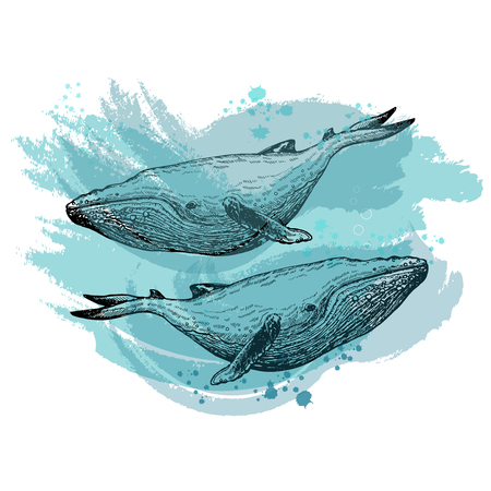 Hand drawn sketch style whales isolated on white background. Vector illustration.