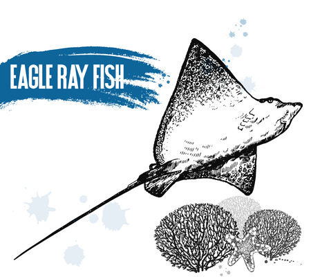 Hand drawn sketch style eagle ray isolated on white background. Vector illustration.