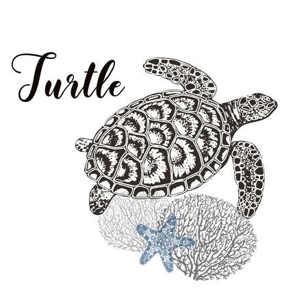 Hand drawn sketch style turtle, corals and sea star isolated on white background. Vector illustration. 向量圖像