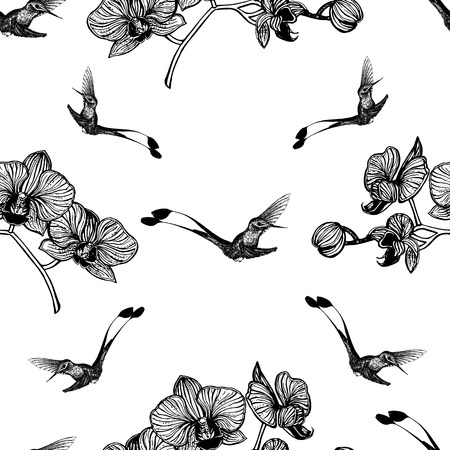 Seamless pattern of hand drawn sketch style hummingbirds and orchid flowers isolated on white background. Vector illustration. 向量圖像