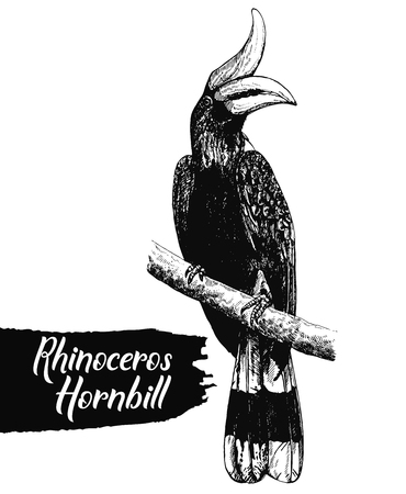 Hand drawn sketch style rhinoceros hornbill isolated on white background. Vector illustration.