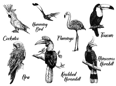 Set of hand drawn sketch style exotic birds isolated on white background. Vector illustration.