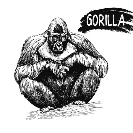 Hand drawn sketch style gorilla isolated on white background. Vector illustration.