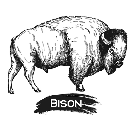 Hand drawn sketch style bison isolated on white background. Vector illustration. Иллюстрация