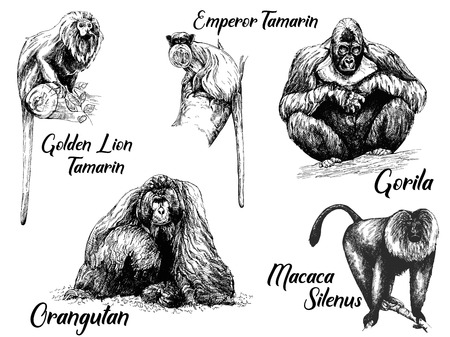 Set of hand drawn sketch style apes isolated on white background. Vector illustration. Illustration