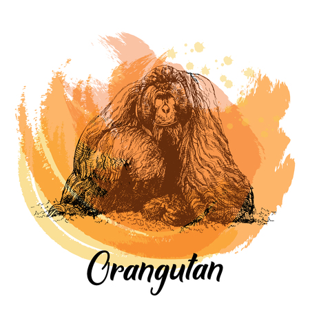 Hand drawn sketch style orangutan isolated on white background. Vector illustration.