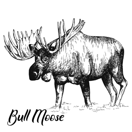 Hand drawn sketch style moose isolated on white background. Vector illustration.