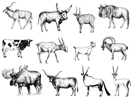 Gran conjunto de ungulados de estilo boceto dibujados a mano aislados sobre fondo blanco. Ilustración de vector.