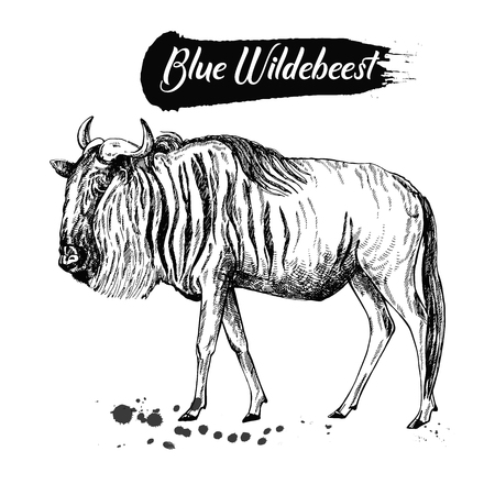 Hand drawn sketch style wildebeest isolated on white background. Vector illustration.