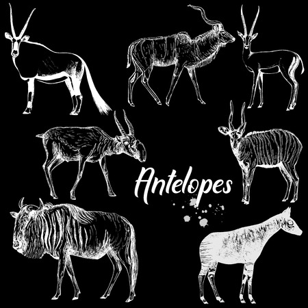 Set of hand drawn sketch style antelopes isolated on black background. Vector illustration.