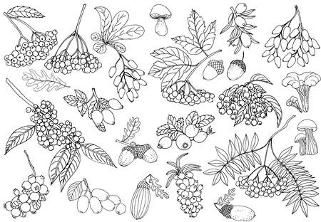 Satz Hand gezeichnete Skizzenart-Herbstpflanzen lokalisiert auf weißem Hintergrund. Vektor-Illustration.