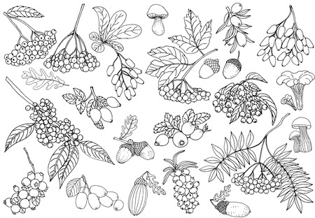 Set of hand drawn sketch style autumn plants isolated on white background. Vector illustration.
