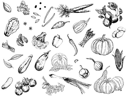 Big set of hand drawn sketch style vegetables isolated on white background. Vector illustration. Vetores
