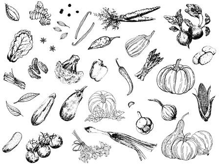 Grand ensemble de légumes de style croquis dessinés à la main isolés sur fond blanc. Illustration vectorielle. Vecteurs