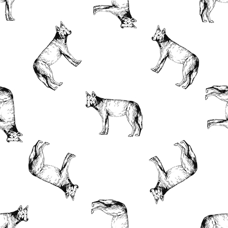 Seamless pattern of hand drawn sketch style dingo dogs isolated on white background. Vector illustration.