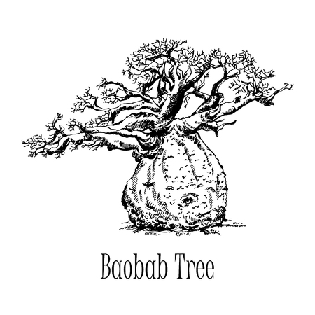 Hand drawn sketch style baobab tree isolated on white background. Vector illustration.