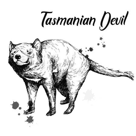 Hand drawn sketch style Tasmanian Devil isolated on white background. Vector illustration. 일러스트