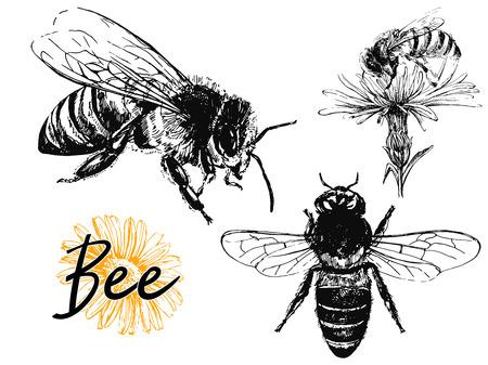 Set hand getrokken schets stijl bijen geïsoleerd op een witte achtergrond. Vector illustratie. Vector Illustratie