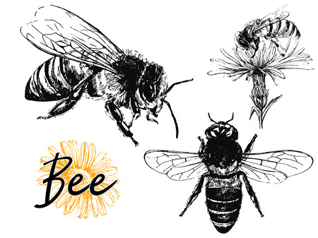 Set of hand drawn sketch style bees isolated on white background. Vector illustration. Ilustração