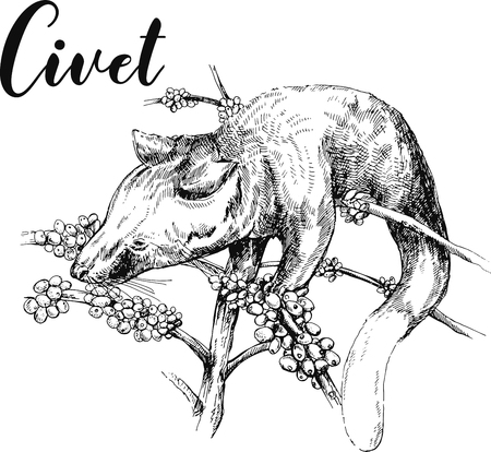 Hand drawn sketch style civet isolated on white background. Vector illustration.