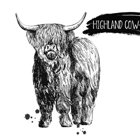 Hand drawn sketch style highland cattle isolated on white background. Vector illustration. Çizim