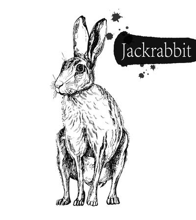 Hand drawn sketch style hare isolated on white background. Vector illustration. Vetores