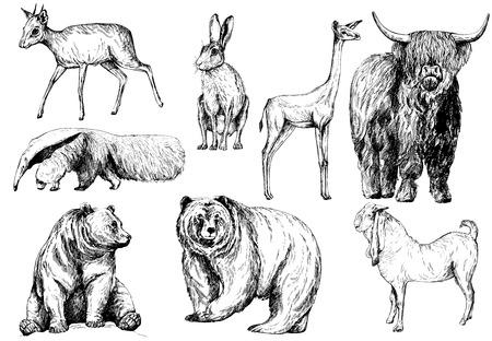 Satz Hand gezeichnete Skizzenarttiere lokalisiert auf weißem Hintergrund. Vektorillustration.