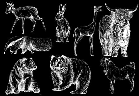 Satz von Hand gezeichneten Skizzenarttieren lokalisiert auf schwarzem Hintergrund. Vektor-Illustration.