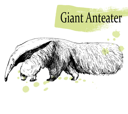Hand drawn sketch style Giant Anteater isolated on white background. Vector illustration.