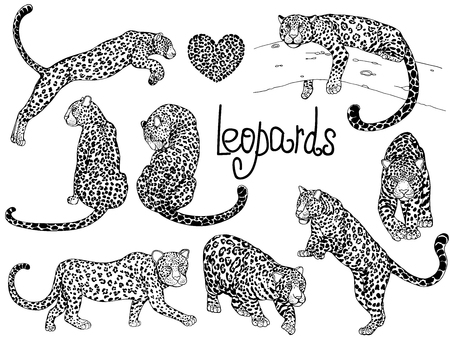 Set of hand drawn sketch style leopards isolated on white background. Vector illustration. Иллюстрация