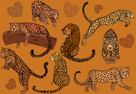 Set of hand drawn sketch style leopards. Vector illustration.