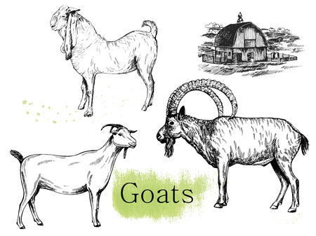 Set of hand drawn sketch style goats and farm house isolated on white background. Vector illustration. Ilustração