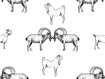 Seamless pattern of hand drawn sketch style goats isolated on white background. Vector illustration.
