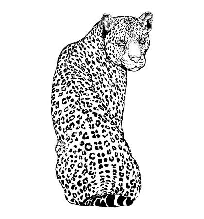 Leopardo de estilo boceto dibujado a mano aislado sobre fondo blanco. Ilustración vectorial.