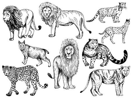 Set of hand drawn sketch style big cats isolated on white background. Vector illustration.