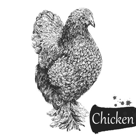 Pollo in stile schizzo disegnato a mano isolato su priorità bassa bianca. Illustrazione vettoriale.