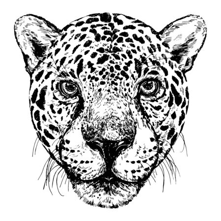 Hand drawn sketch style portrait of leopard isolated on white background. Vector illustration. Çizim