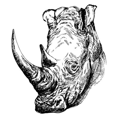 Hand drawn sketch style portrait of rhino isolated on white background. Vector illustration.
