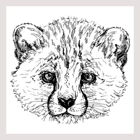 Hand drawn sketch style portrait of cheetah isolated on white background. Vector illustration. Çizim
