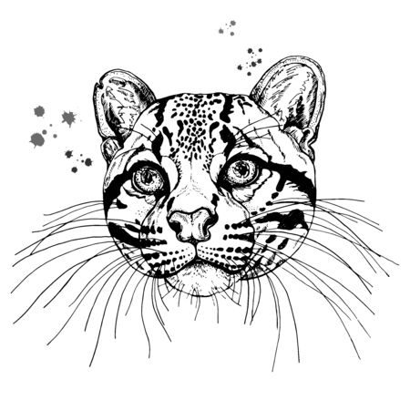 Hand drawn sketch style portrait of clouded leopard isolated on white background. Vector illustration. Иллюстрация