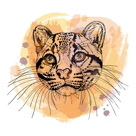 Hand drawn sketch style portrait of clouded leopard isolated on white background. Vector illustration. Çizim