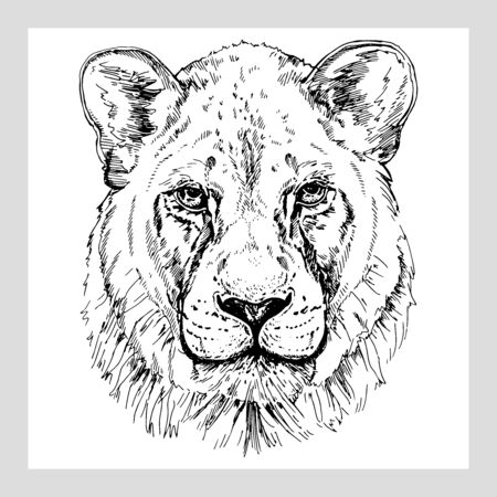 Hand drawn sketch style portrait of lioness isolated on white background. Vector illustration. Иллюстрация
